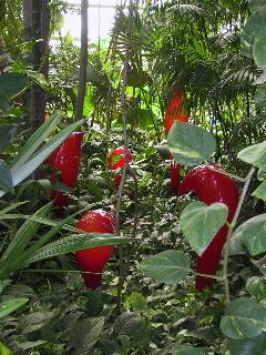 Red Rainforest